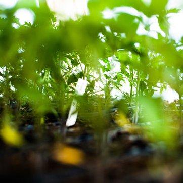 Bio Garten